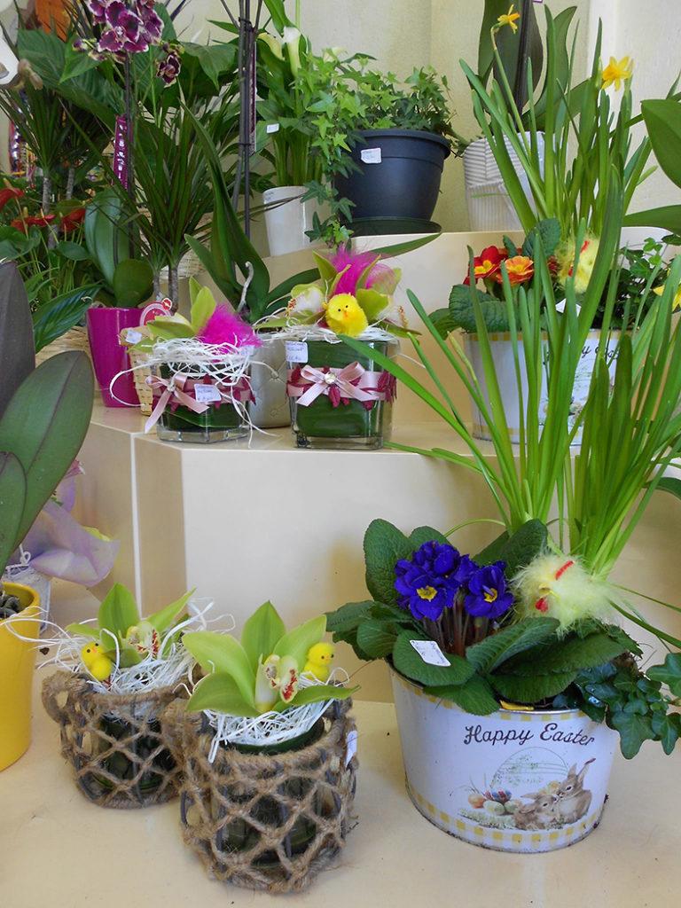 Piante Da Regalare A Pasqua blog - la fiorista